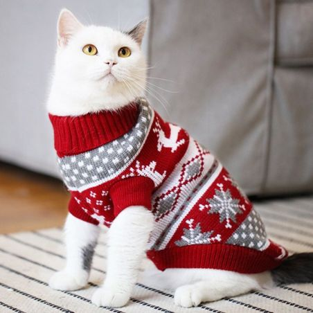 vetement chat