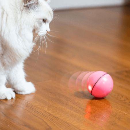 jouet chat pas cher