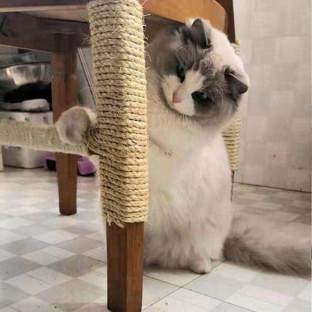 corde griffoir chat