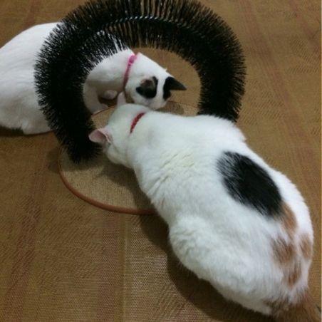 grattoir arche pour chat