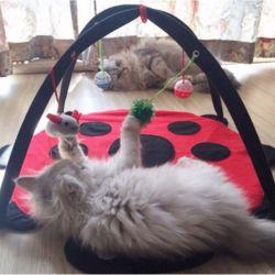 Jeu pour chat appartement