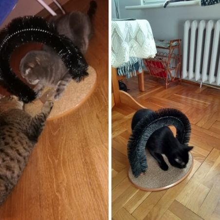 Grattoir brosse pour chat