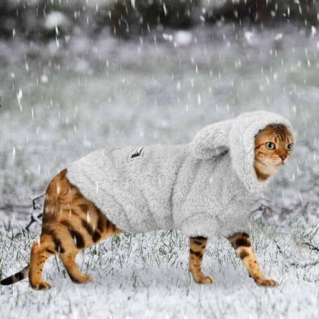 vêtement pour chat